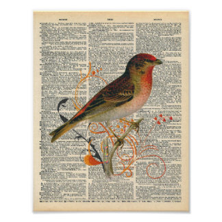 Vintage Dictionary Art Pretty Red Orange Bird Art Poster