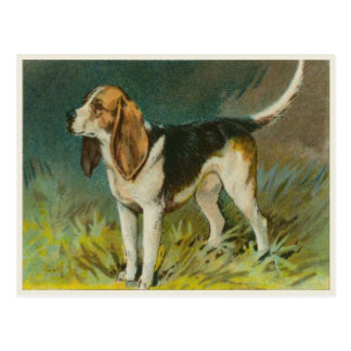 Vintage Dog Postcard With Cute Beagle