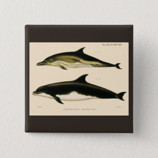Vintage Dolphins, Marine Animals and Mammals 2 Inch Square Button