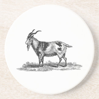 Vintage Domestic Goat Illustration - 1800's Goats Coaster