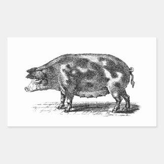 Vintage Domestic Hog Illustration - 1800's Pig