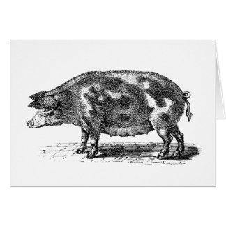 Vintage Domestic Hog Illustration - 1800's Pig Card