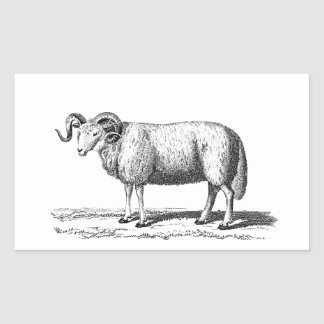 Vintage Domestic Sheep Illustration -1800's Ram