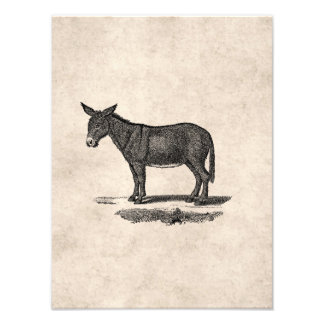 Vintage Donkey Illustration - 1800's Donkeys Photo Print
