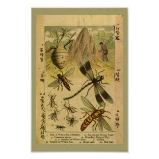 Vintage Dragon Fly Insects Natural History Print