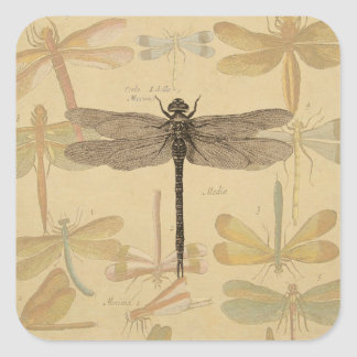 Vintage dragonfly drawing square sticker