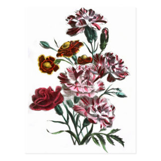 Vintage Drawing: Flemish Pink Flowers Postcard