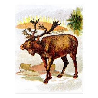Vintage Drawing: Reindeer in the Snow Postcard