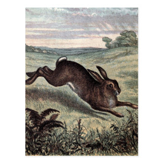 Vintage Drawing: Running Hare in a Field Postcard