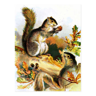 Vintage Drawing: Squirrels in Autumn Postcard
