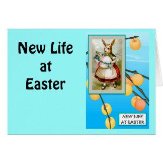Vintage Easter greetings, Meet the rabbit Greeting Cards