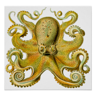 Vintage Ernst Haeckel Octopus in Yellow Posters