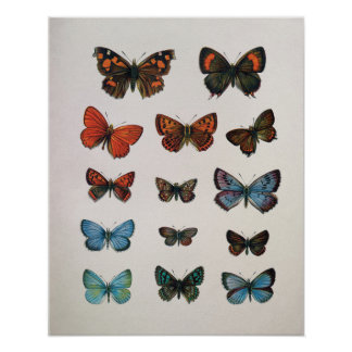 Vintage European Butterflies Art Print