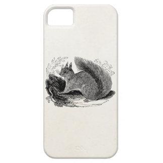 Vintage European Squirrel 1800s Squirrels iPhone 5 Covers