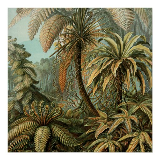 Vintage Ferns and Palm Tree Botanical Print
