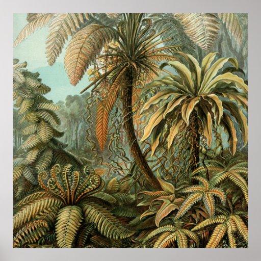 Vintage Ferns and Palm Tree Botanical Print