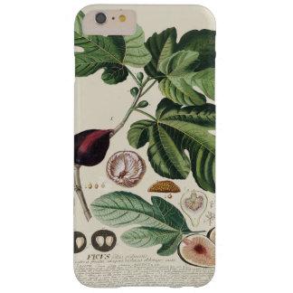 Vintage Figs Botanical Print iPhone 7 Cases