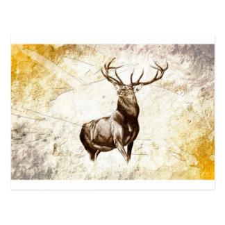Vintage fineart F079 deer Postcard