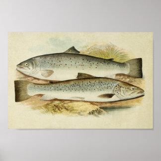 Vintage Fish Print 036   Short-Headed Salmon