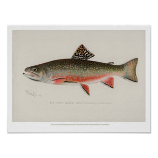 Vintage Fishes - Brook Trout Poster