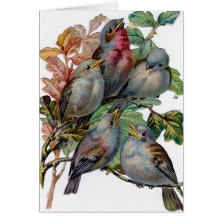 Vintage - Five Song Birds, Card