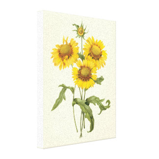 Vintage Floral Blanket Flower Sunflower by Redoute Canvas Print