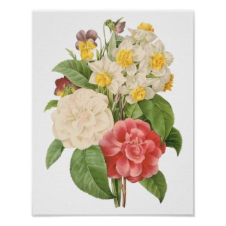 Vintage Floral Camelia Daffodil Flowers by Redoute Poster