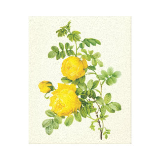 Vintage Floral Flowers, Yellow Roses by Redoute Canvas Print
