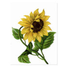 Vintage Floral Sunflower Yellow & Green Flower Postcard
