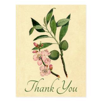 Vintage Floral Thank You Pink Almond Flower Postcard