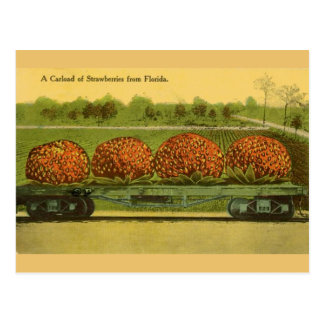 Vintage Florida Strawberries Travel Post Card