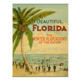 Vintage Florida Winter Playground Postcard