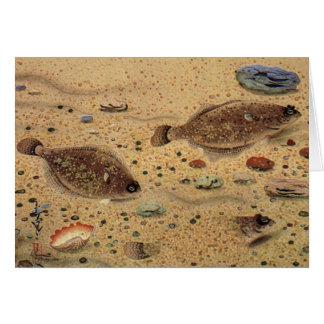 Vintage Flounders, Marine Ocean Life Flat Fish Card