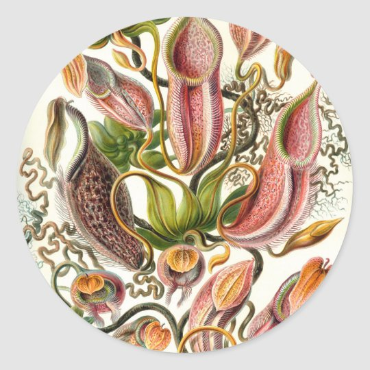 Vintage Flower Illustration Classic Round Sticker