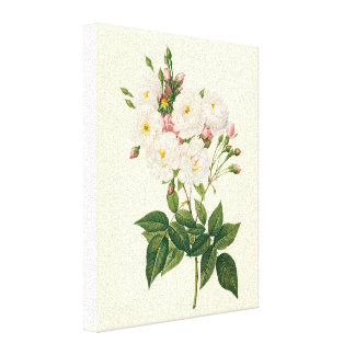 Vintage Flowers Floral Blush Noisette Rose Redoute Stretched Canvas Prints