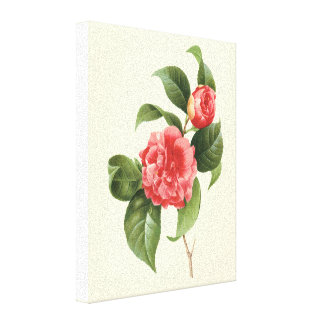 Vintage Flowers Floral Red Pink Camellias Redoute Gallery Wrap Canvas