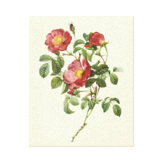 Vintage Flowers Floral Red Rose of Love by Redoute Stretched Canvas Print