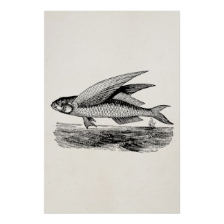 Vintage Flying Fish - Aquatic Fishes Template Poster