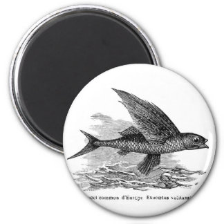Vintage flying fish fridge magnet