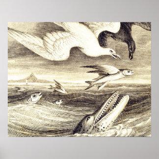Vintage Flying Fish & Sea Bird Engraving - Custom Poster