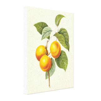 Vintage Food Fruit, Apricot Peach by Redoute Gallery Wrapped Canvas