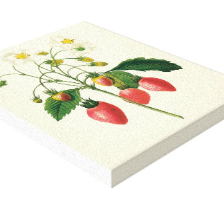 Vintage Food Fruit Berries Strawberries by Redoute Gallery Wrapped Canvas