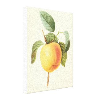 Vintage Food Fruit, Calville Apple by Redoute Gallery Wrapped Canvas