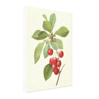 Vintage Food Fruit, Cherry Cherries by Redoute Gallery Wrap Canvas