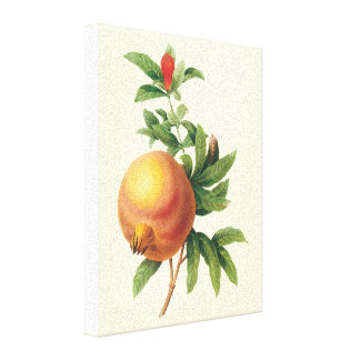 Vintage Food Fruit, Pomegranate by Redoute Stretched Canvas Print