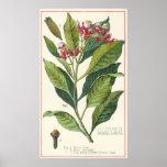 Vintage Food Herbs Spices, Botany of Cloves Poster