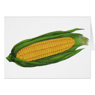 Vintage Food Vegetables; Yellow Corn on the Cob Card