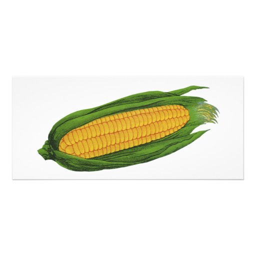 Vintage Food Vegetables; Yellow Corn on the Cob Personalized Rack Card
