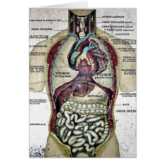 Vintage French Anatomy Card
