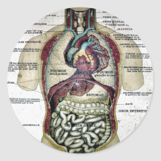 Vintage French Anatomy Sticker